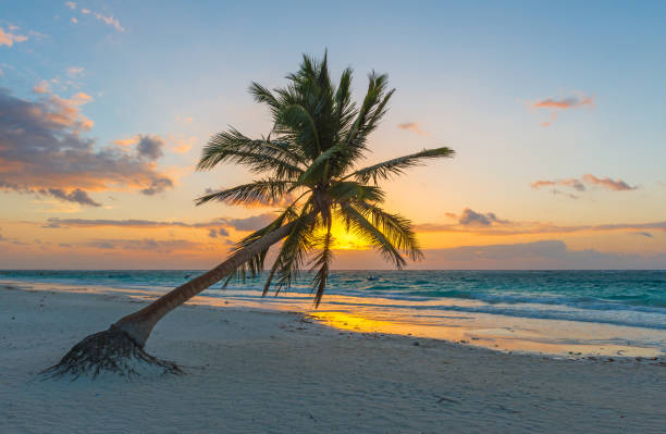 Palm Tree Sunrise in Tulum stock photo