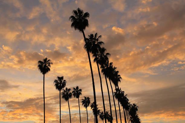 Palm Tree Sunset 2016 stock photo