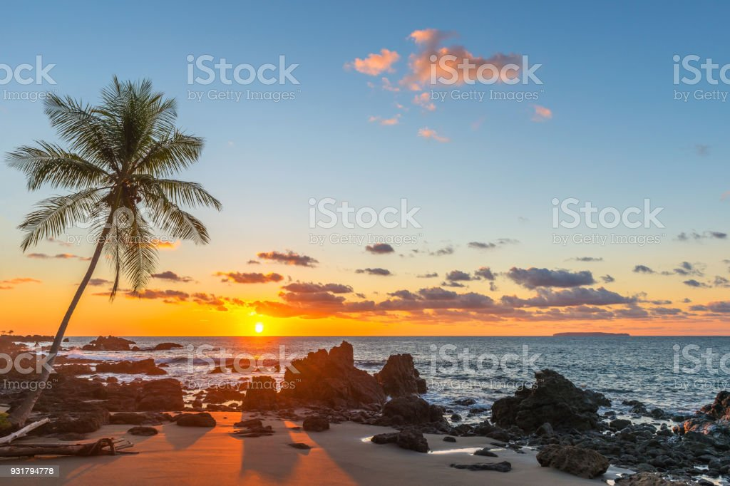 Palm Tree Sunset in Costa Rica stock photo