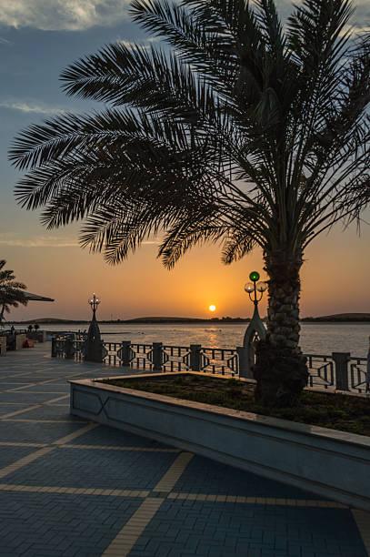 palme bei sonnenuntergang - hochzeitsreise dubai stock-fotos und bilder