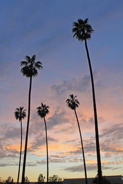 Palm Tree Sunset Vertical stock photo
