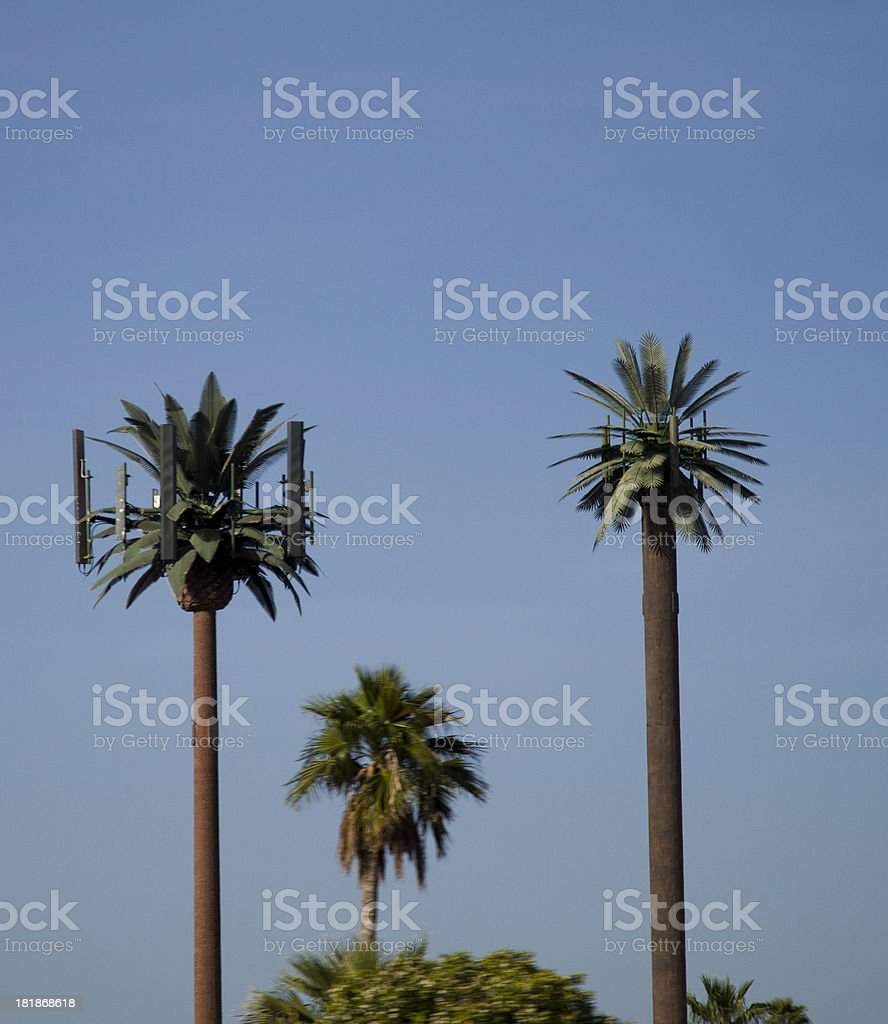 Palm Tree Technology royalty-free stock photo