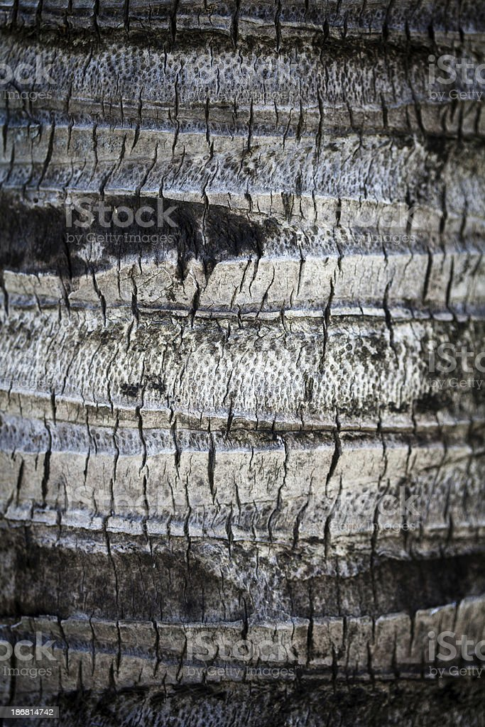 Palm tree texture background royalty-free stock photo