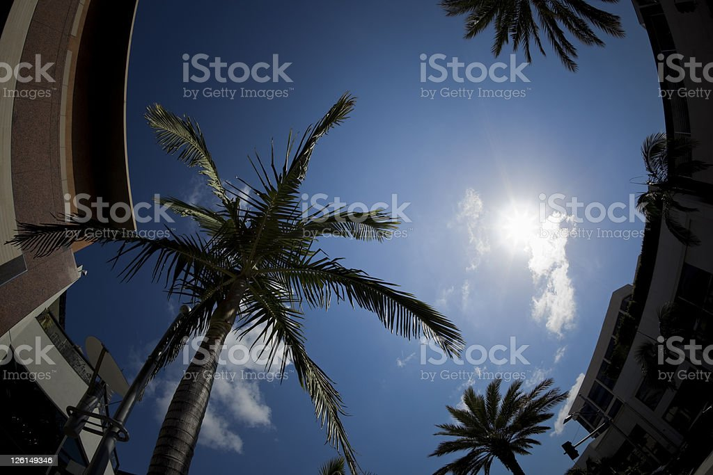 Palm Tree Treetop Against Blue Sky in Beverly Hills Fisheye royalty-free stock photo