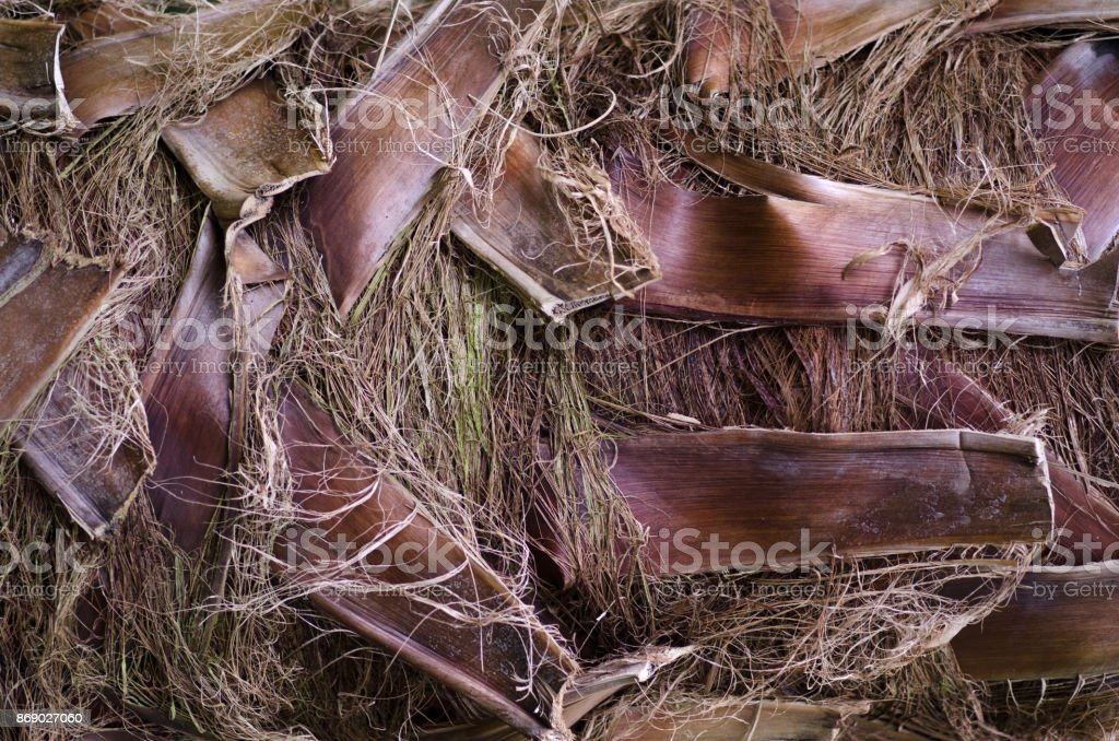 Palm tree trunk background stock photo
