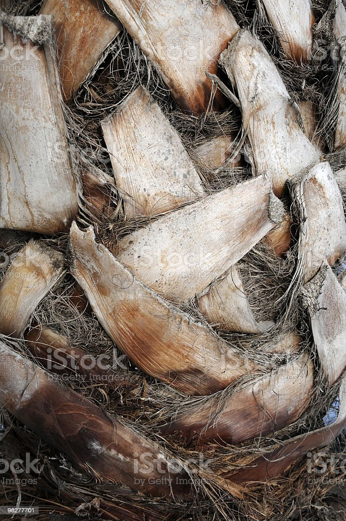 palm tree trunk detail royalty-free stock photo