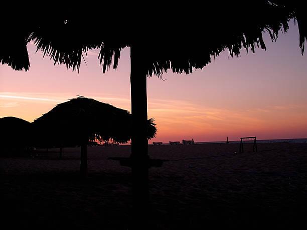 Palm tree umbrelas stock photo