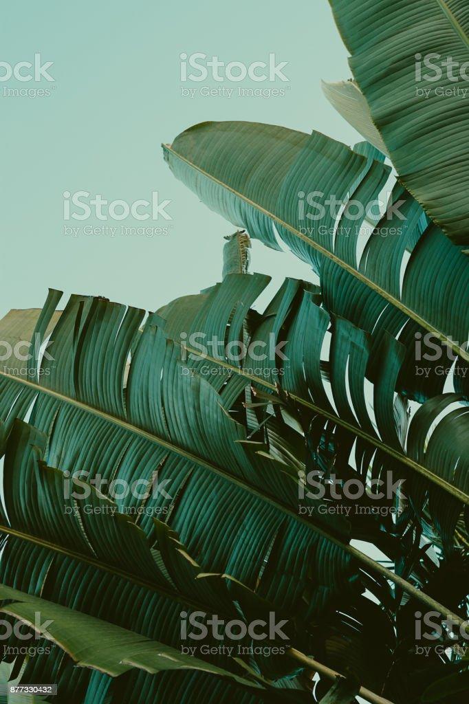 Palm tree under blue sky. Vintage background. Travel card. Vintage effect. stock photo