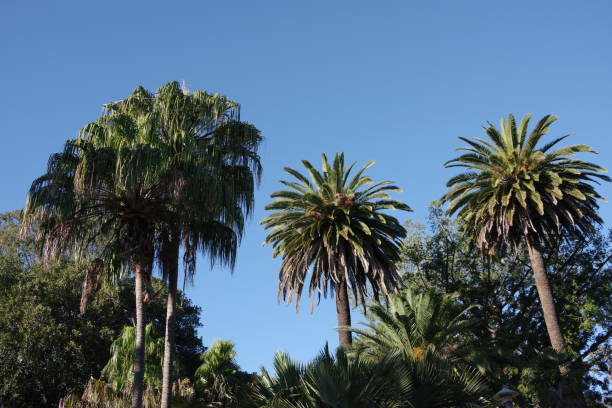 Palm Tree Variety stock photo