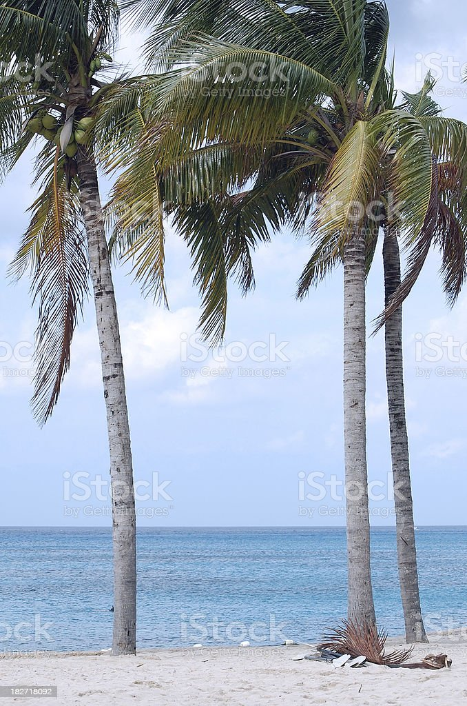 Palm Tree Vertical Background royalty-free stock photo