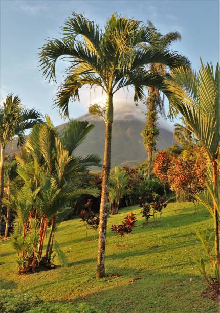 Palm Tree with Arenal Volcano in the distance Palm tree with the Arenal Volcano in the distance arenal volcano stock pictures, royalty-free photos & images