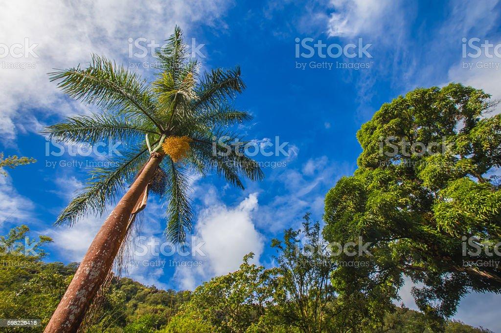 Palmeira com céu azul foto royalty-free