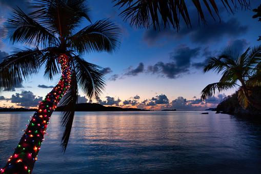 Palm tree with Christmas lights on a tropical beach