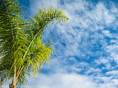 Palm tree with clear blue sky