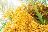 Date - Fruit, Fruit, Dried Food, Dried Fruit, Food