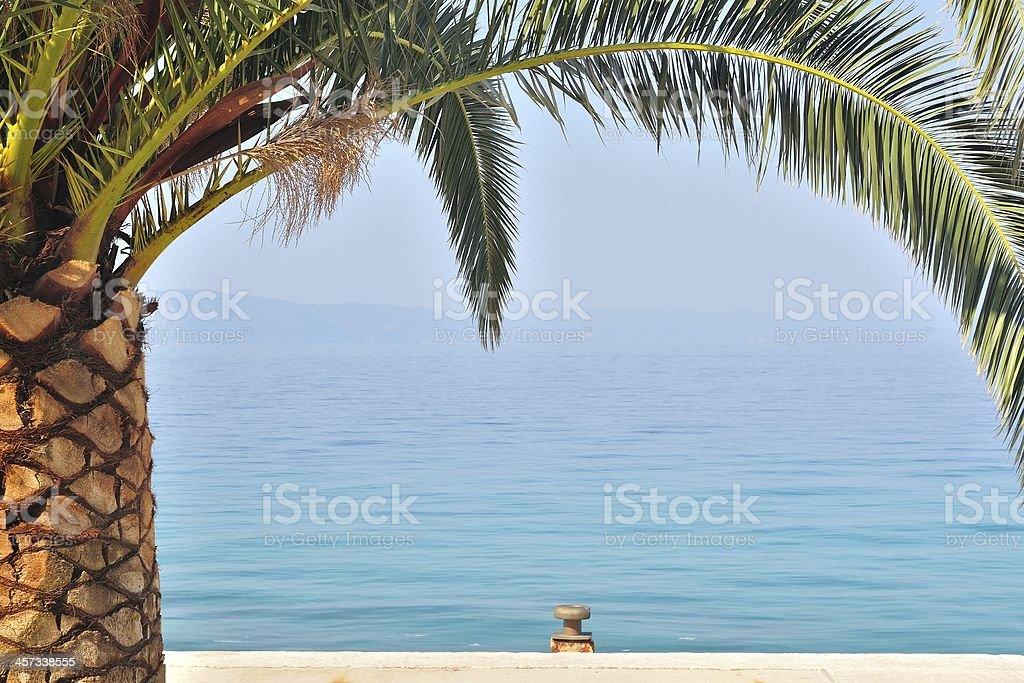 Dłoń drzewo z morzem w tle zbiór zdjęć royalty-free