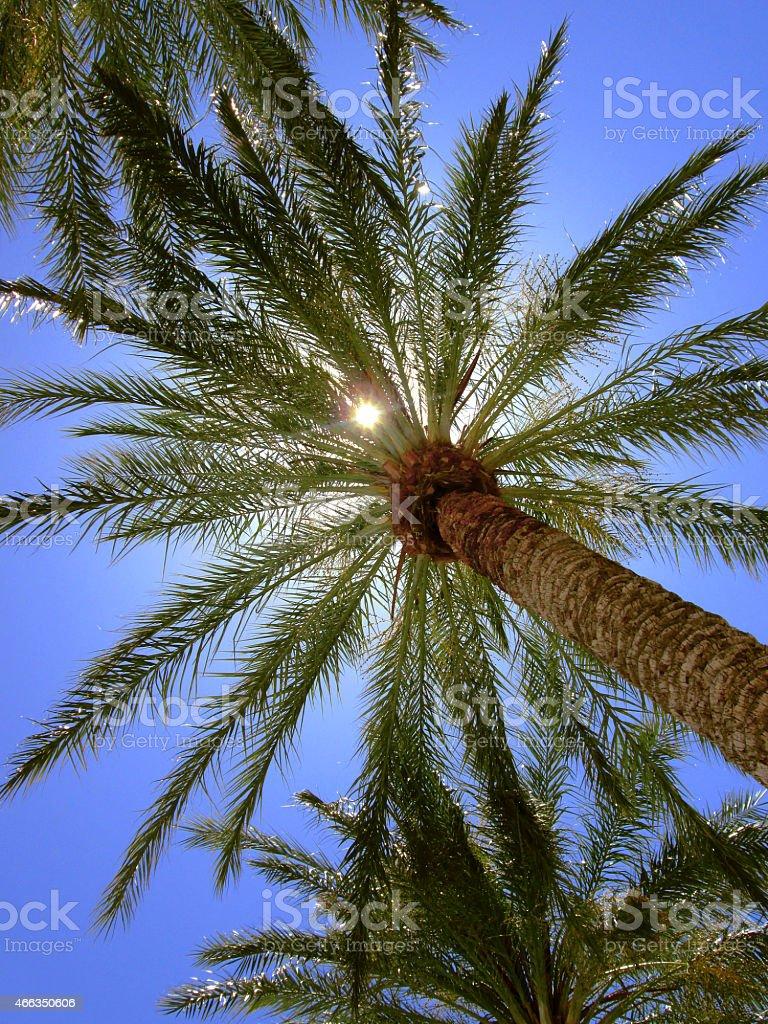 Palm Tree with Sun stock photo