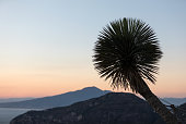 Palm tree with the Gulf of Naples and Vesuvius in the background