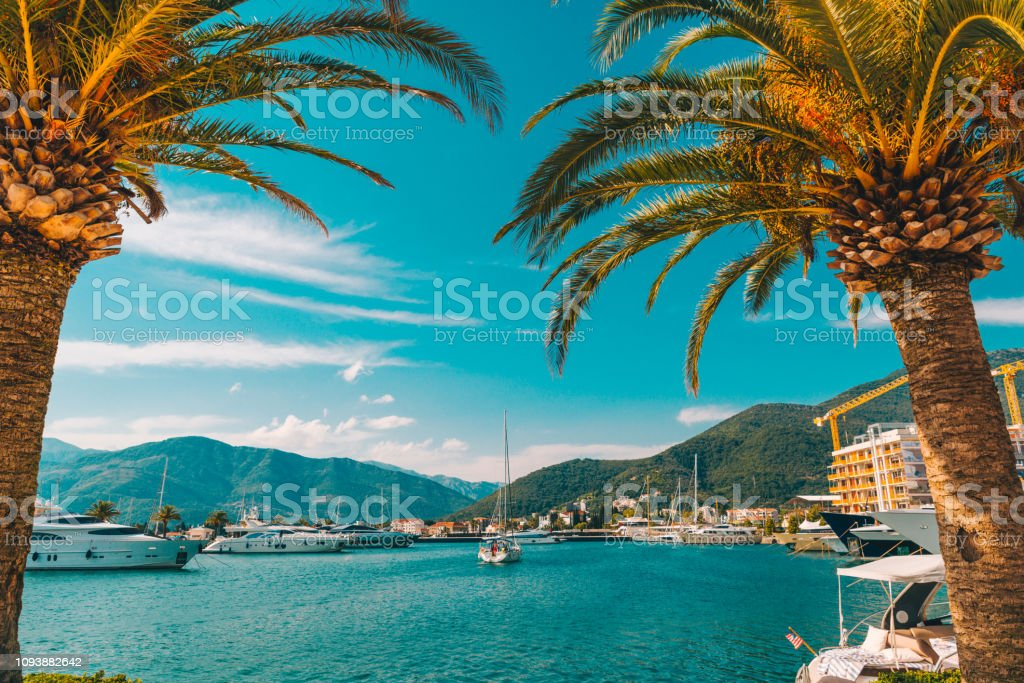 palm tree with yachts on background stock photo