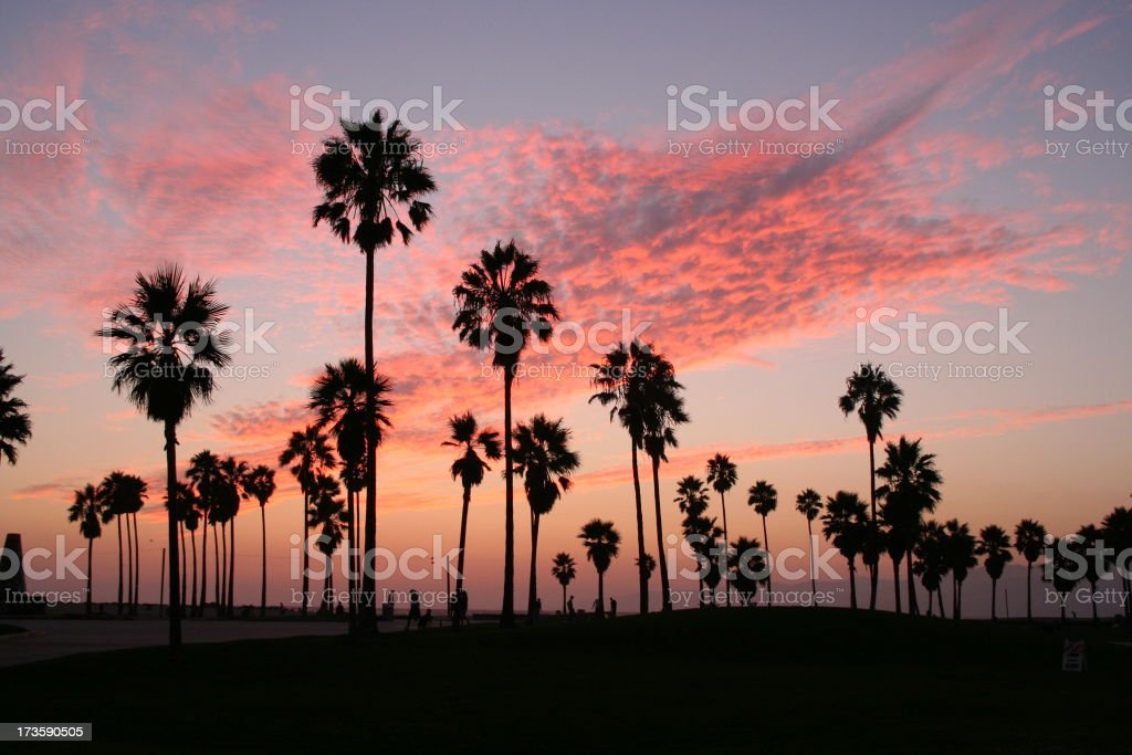 Palm Trees 2 stock photo