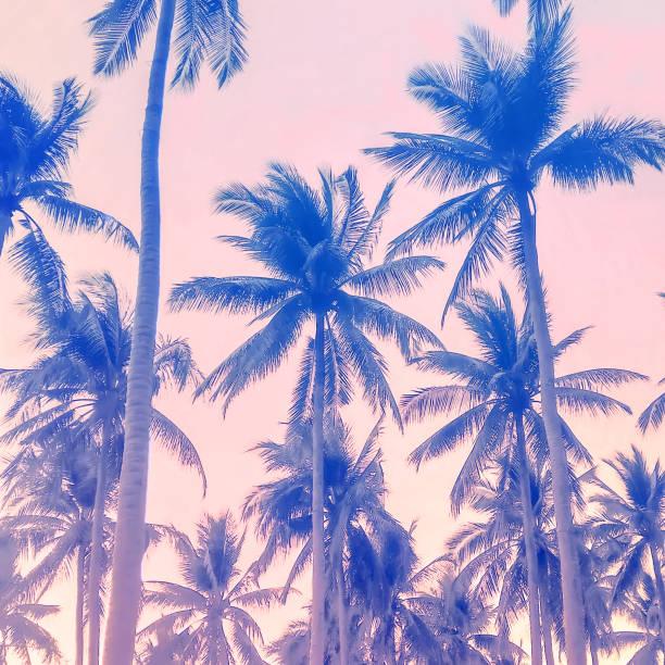 Palmen abstrakten Hintergrund. Sommerurlaub und Natur reisen Erlebniskonzept. Vintage-Ton-Filter-Effekt Farbstil. – Foto