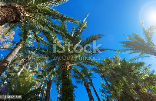 1145102719istockphoto Palm trees against the blue sky and the hot sun. Concept of summer holidays. Background 1143421846