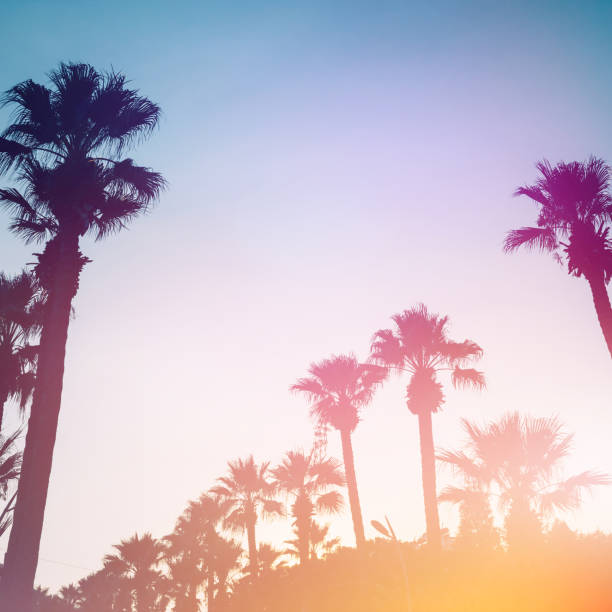Palm trees against the sunset. Palm trees against the sunset. Summer tropical background. hollywood california stock pictures, royalty-free photos & images