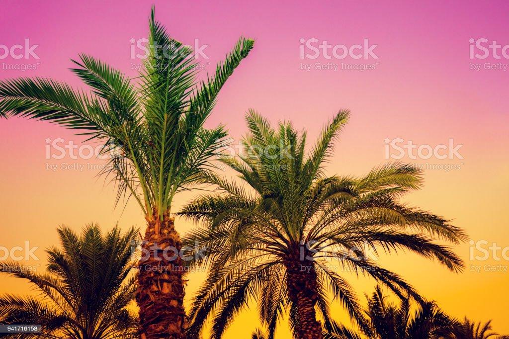 Palmen vor dem Sonnenuntergang Himmel. Rosa-gelben Farbverlauf. Wunderschönen tropischen Abend Natur – Foto