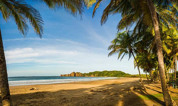 XXXL: Palm trees along an empty beach stock photo