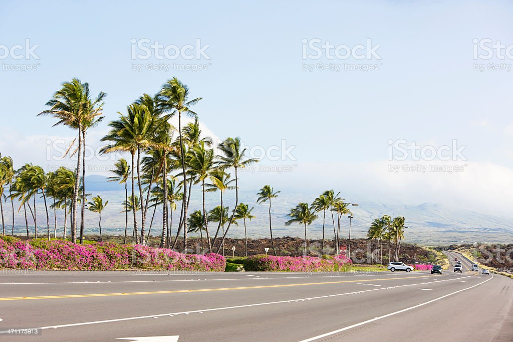 Palm trees along the road royalty-free stock photo