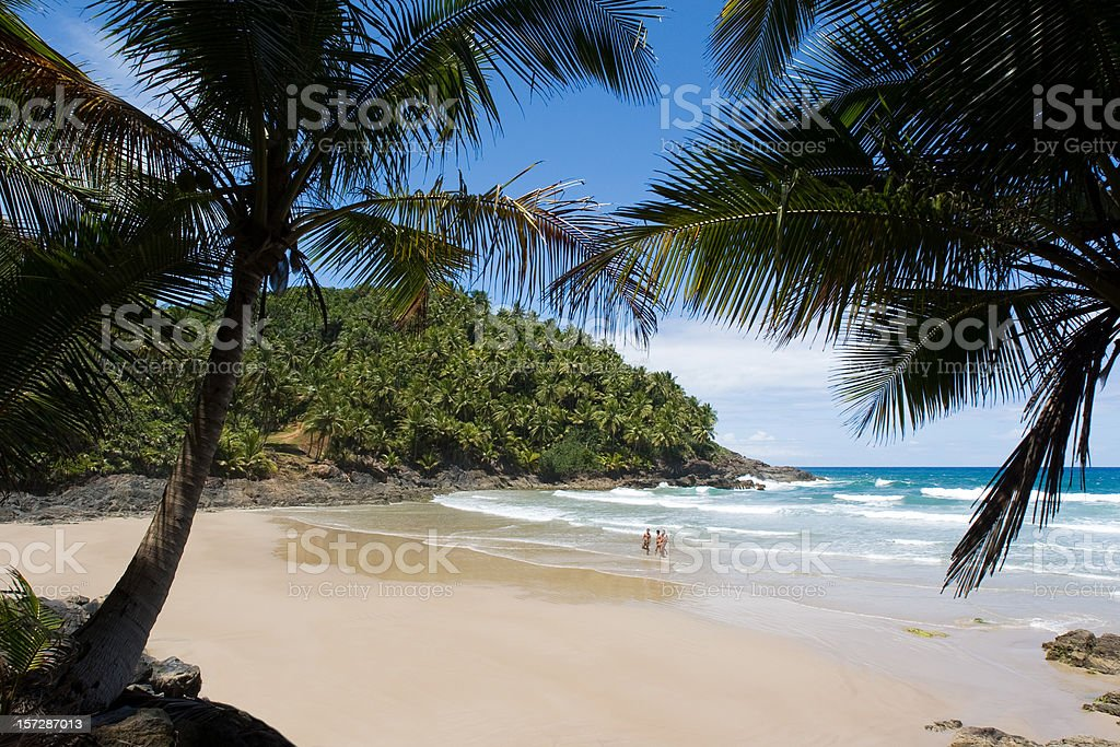 Palm trees along the sands of a tropical beach in Brazil Secluded beach hidden in Bahia state, one of the best touristic destinations in Brazil. Bahia State Stock Photo
