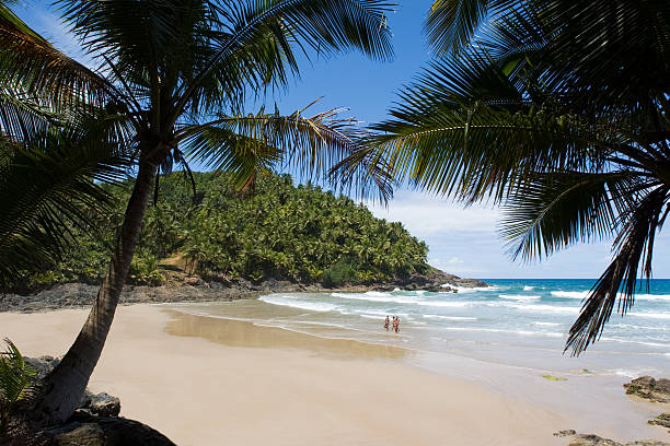 Palm trees along the sands of a tropical beach in Brazil stock photo
