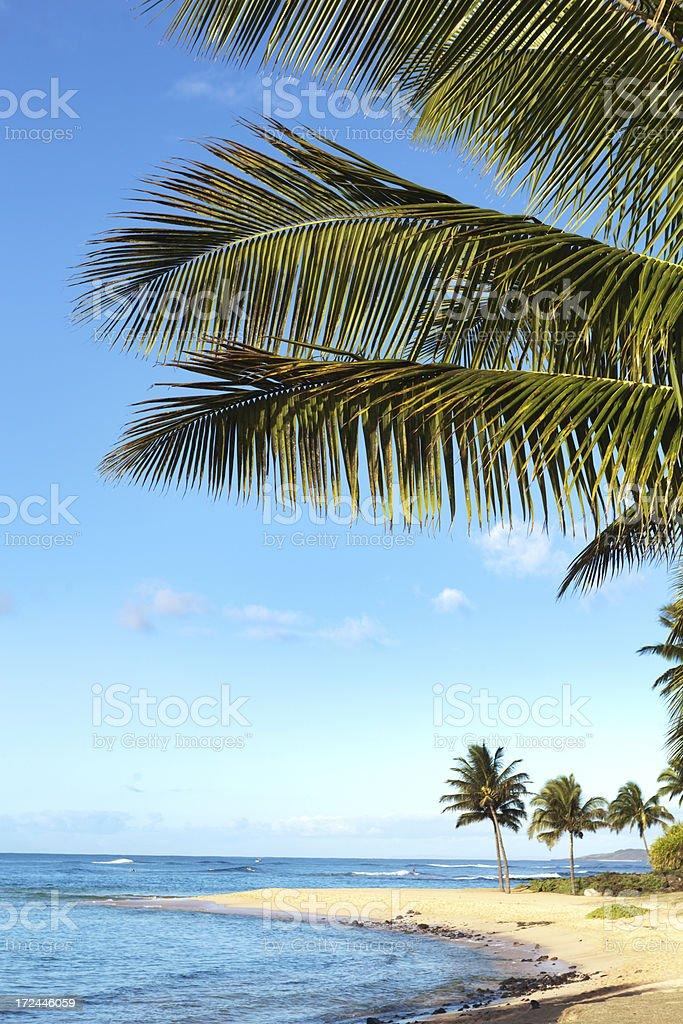 Palm Trees and at Poipu Beach of Kauai Hawaii Vt stock photo