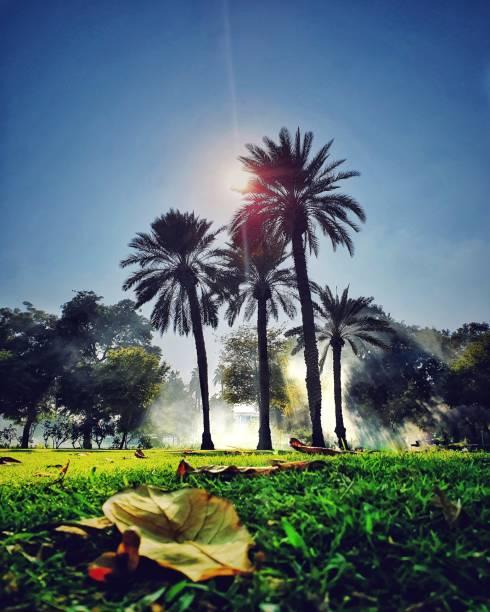 Palmen und Grillrauch im Safa Park – Foto