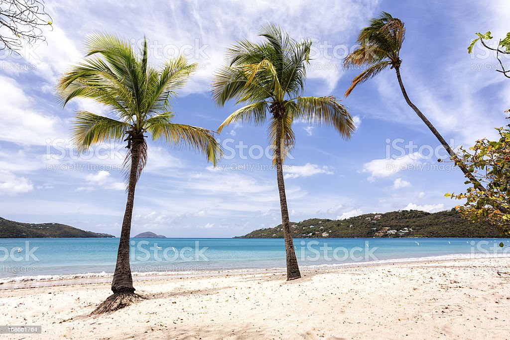 Palm Trees and Beach royalty-free stock photo