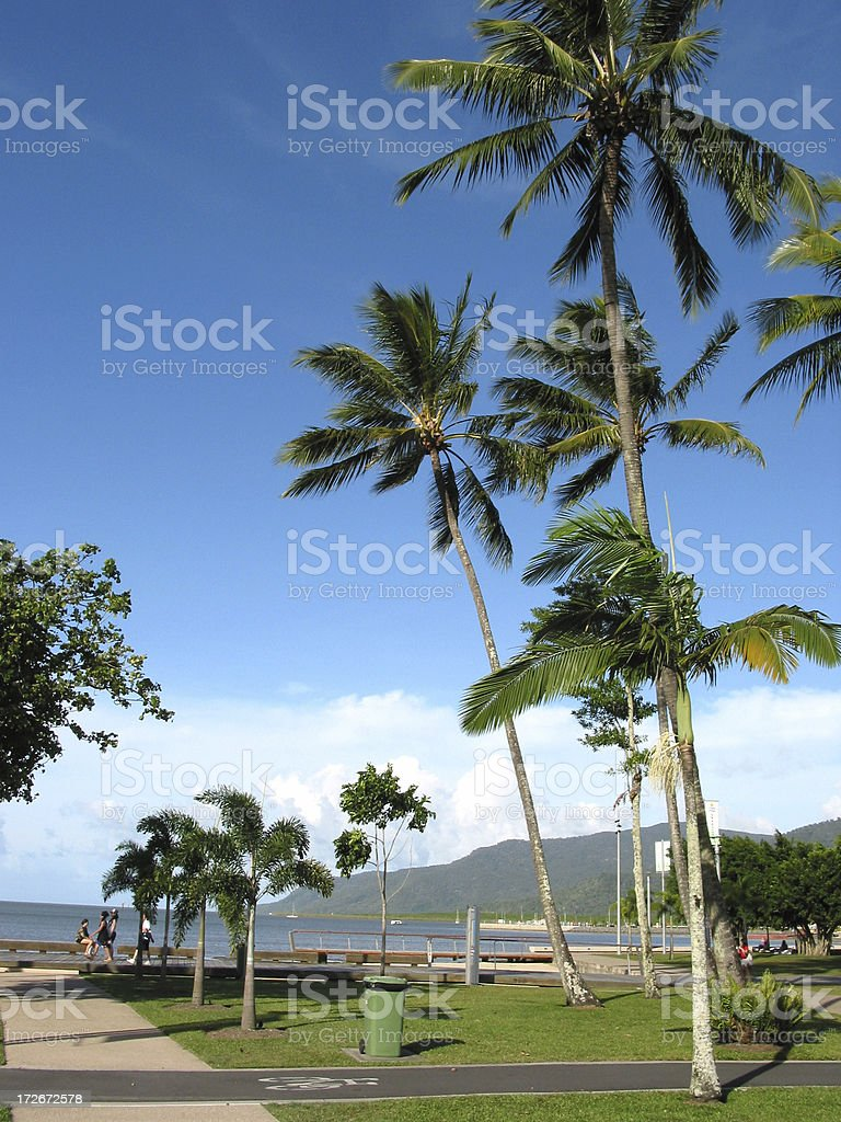Palm Trees and Blue Skies stock photo