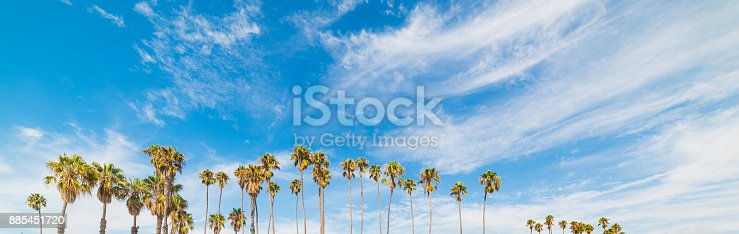 Palm trees and blue sky in California, USA