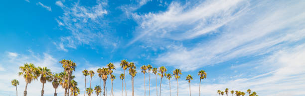 Palm trees and blue sky in California Palm trees and blue sky in California, USA santa barbara california stock pictures, royalty-free photos & images