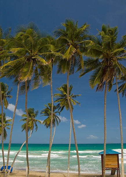 Palm trees and Caribbean sea stock photo