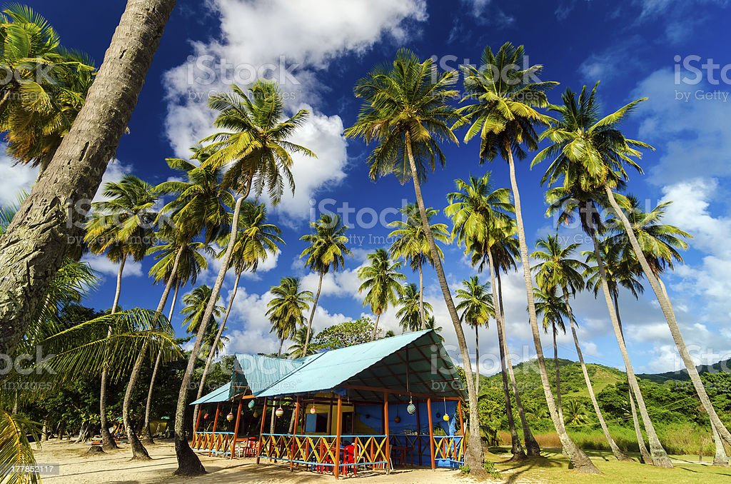 Palm Trees and Colorful Building stock photo