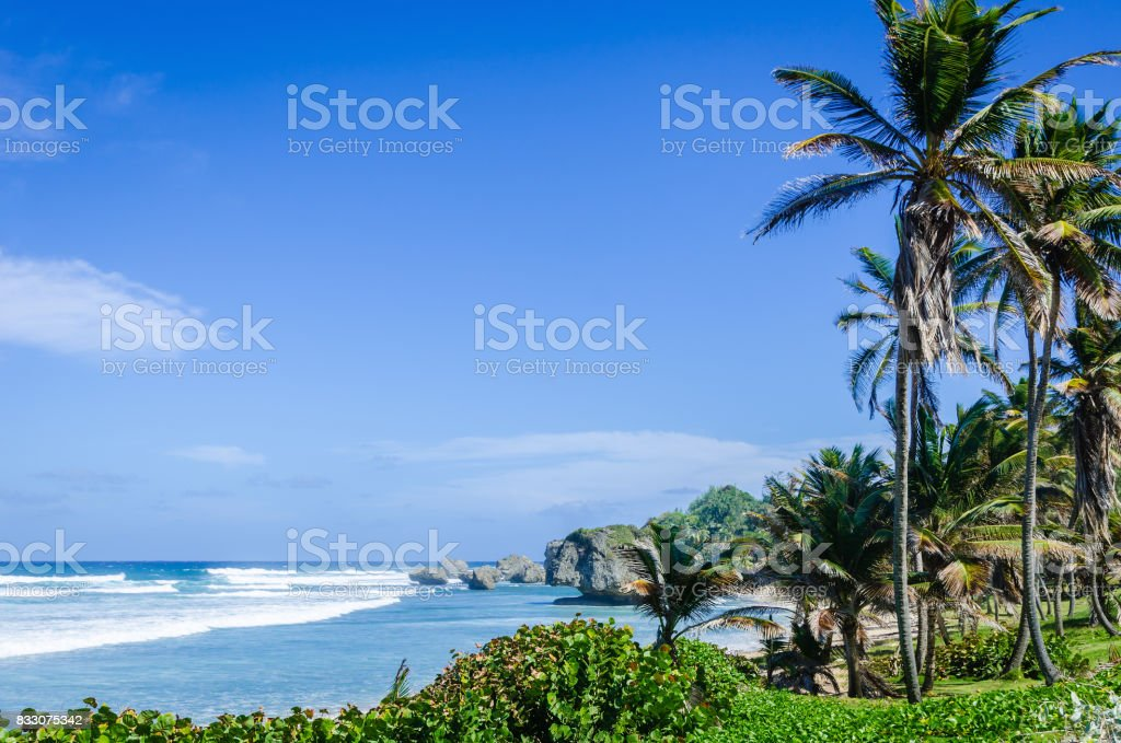 Palm trees and coral rocks on the beach stock photo