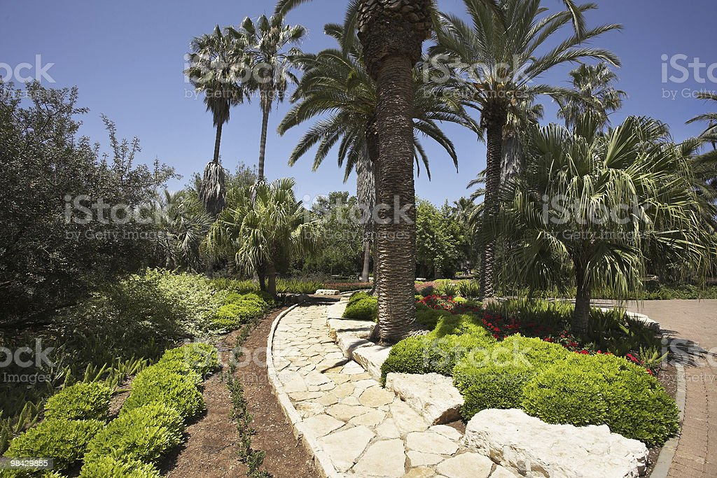Palm trees and flower beds royalty-free stock photo