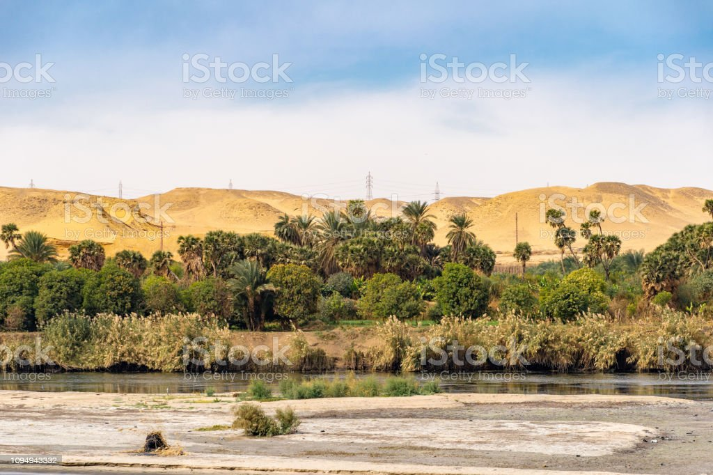 Palm trees and greenery on the banks of the River Nile in Egypt stock photo