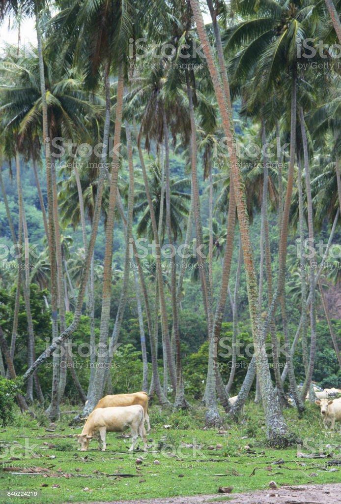 Palmiers et cheval - Photo