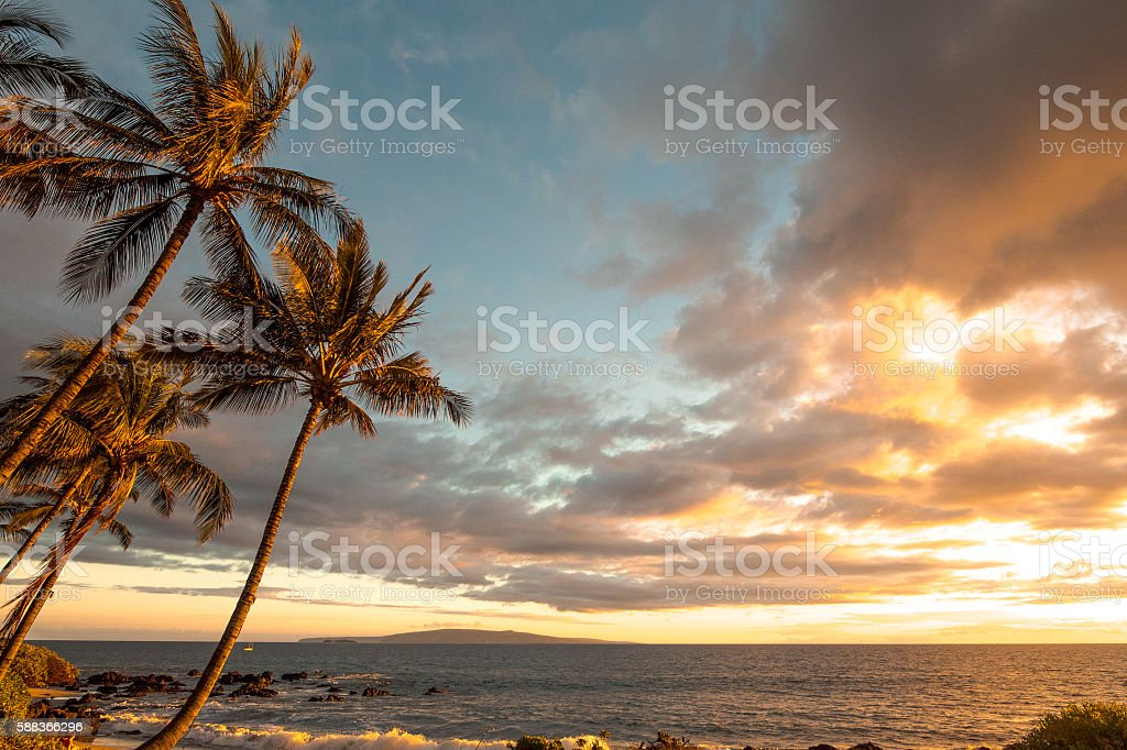 Palm Trees and Island off Maui Coast stock photo