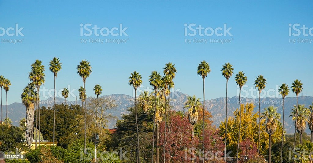 Palm Trees and mountains in Los Angeles stock photo