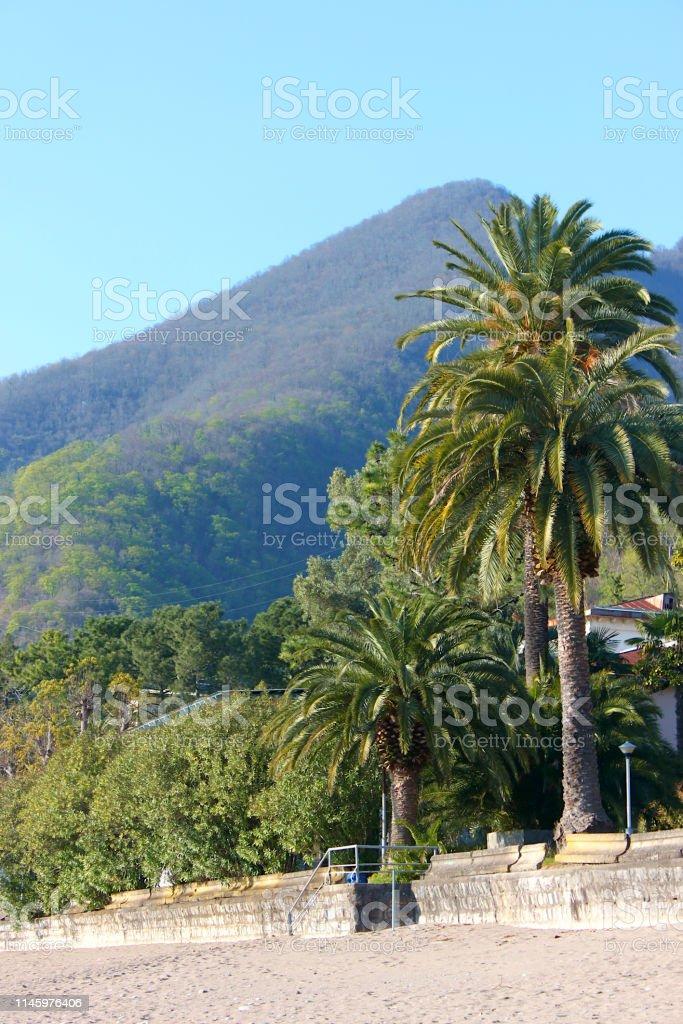 Palm trees and mountains on the shore. Gagra, Abkhazia