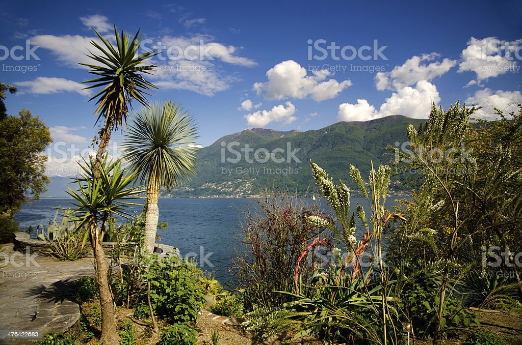 Palm trees and mountains with a lake and blue sky with clouds