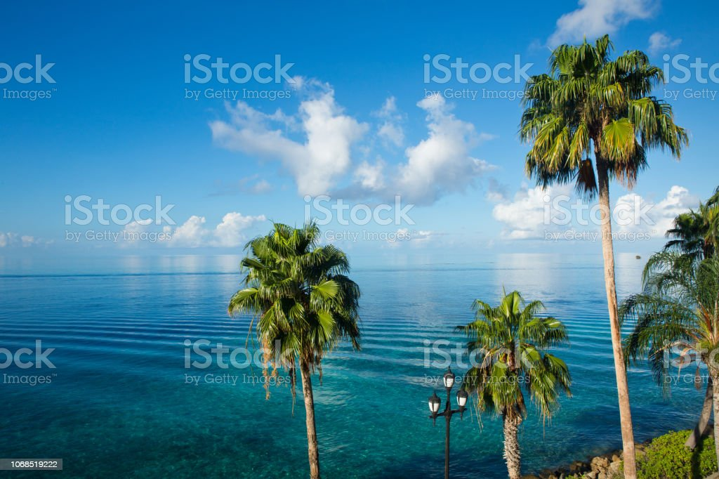 Palm trees and ocean Caribbean background stock photo