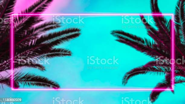 Photo of Palm trees and pink neon light frame.